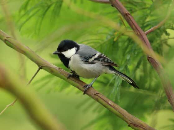 Merlin Bird ID - Celside Magazine