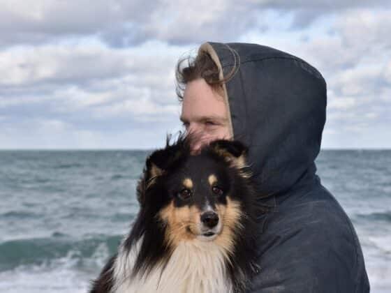 applications rendre meilleure vie animal compagnie - Celside Magazine.jpg